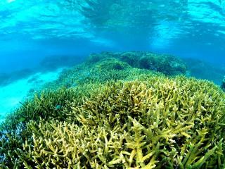 インリーフのサンゴ礁