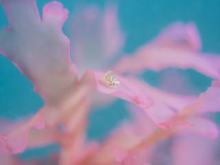 桜GOKKO
