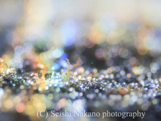 20151004-_MG_7603